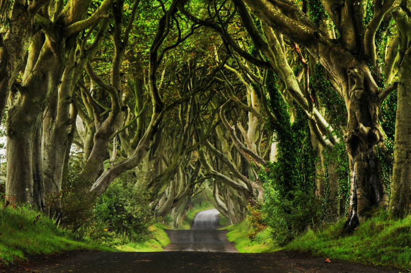 Dark-Hedges_017_800x533