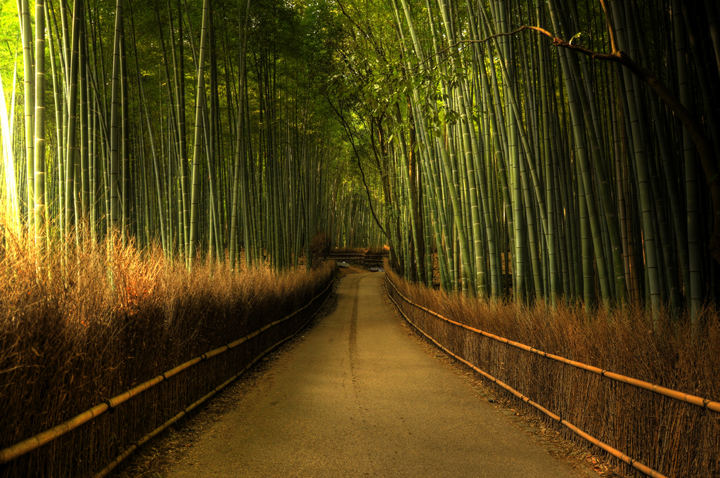 Sagano-Bamboo-Forest-Japan-Weijie